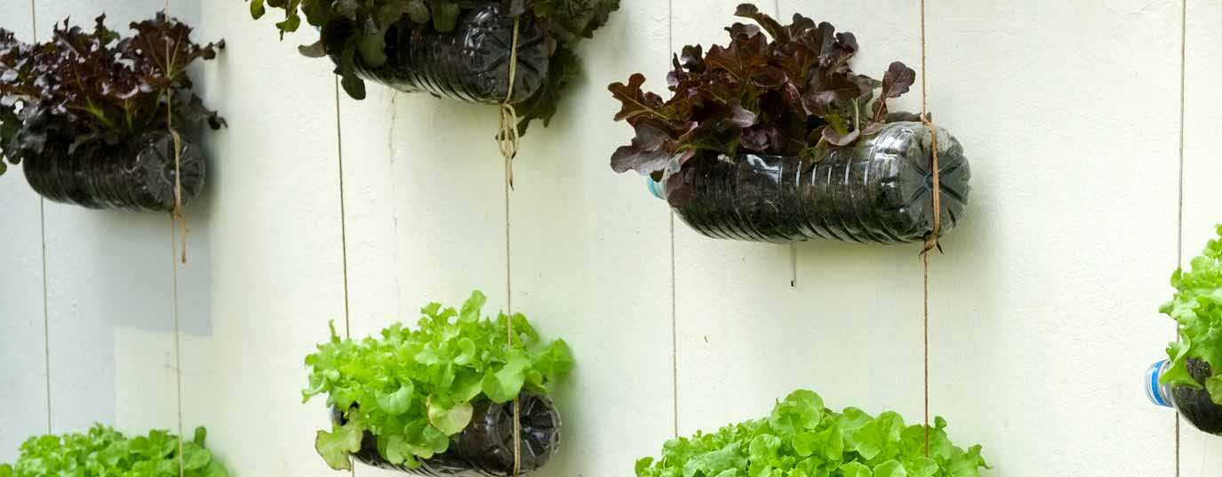 <p>Tricks for your summer urban vegetable garden</p>