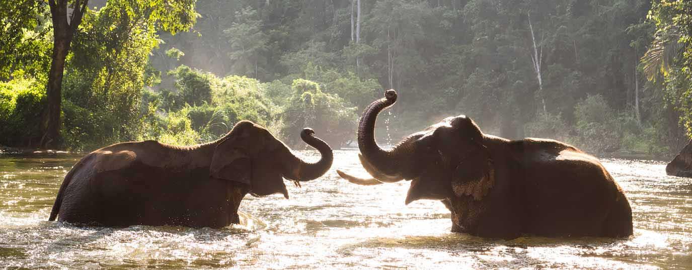 <h2>Asian elephant</h2>