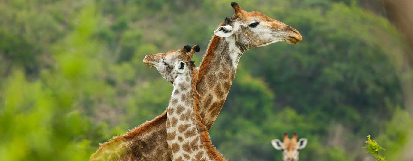 Top 10 Animales En Peligro De Extincion Sostenibilidad