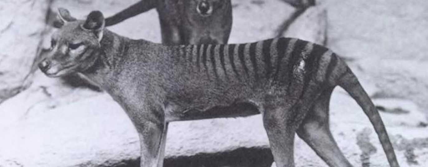 <p>Top 10 animales extintos</p>