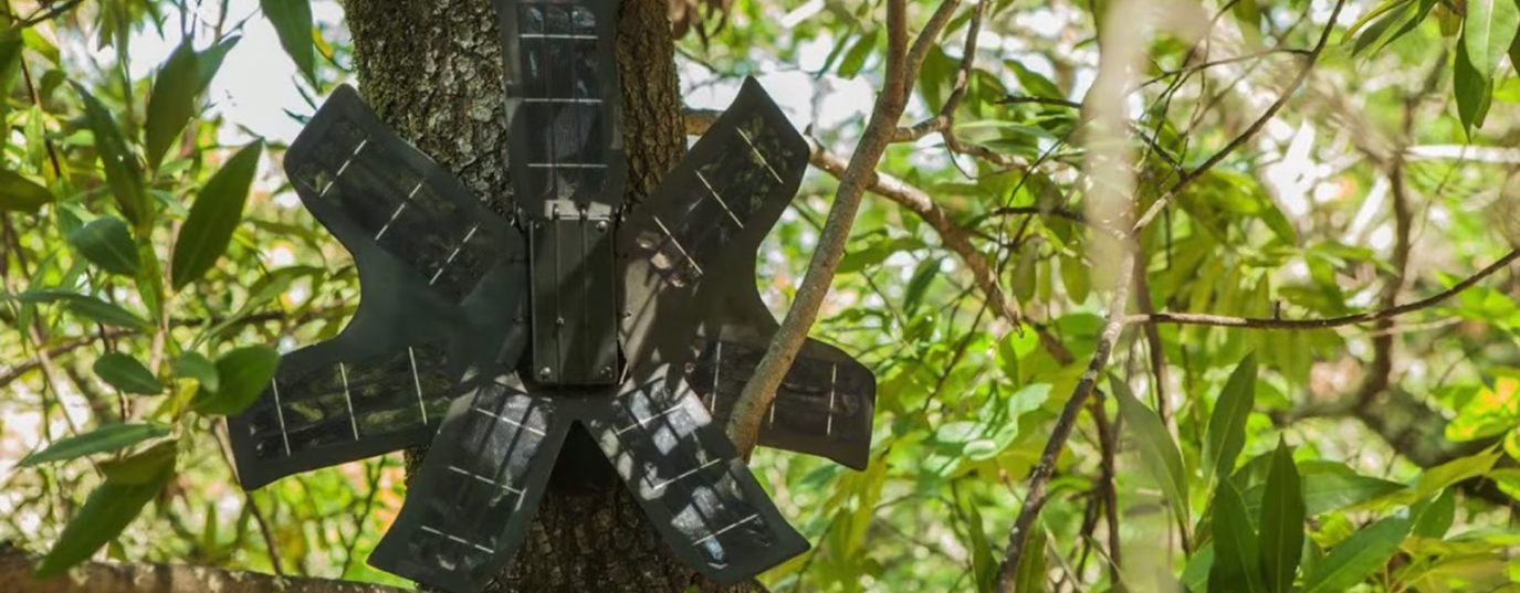 <h3>Recycled cell-phones that detect illegal logging</h3>