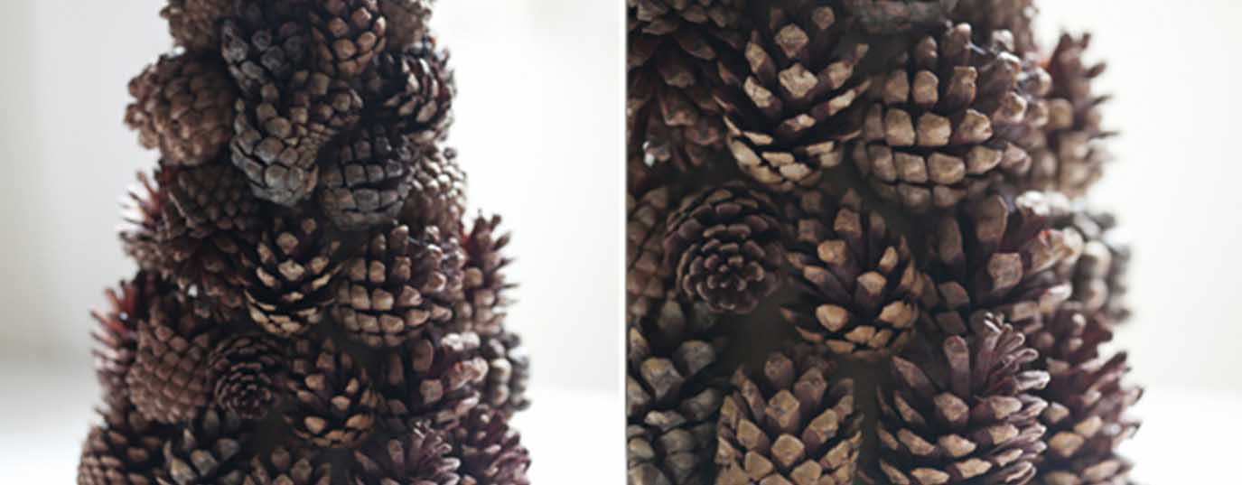 <p>Mini pinecone tree</p>