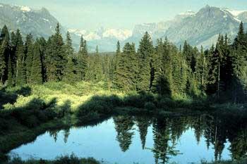 Resultado de imagen de dia internacional de los bosques