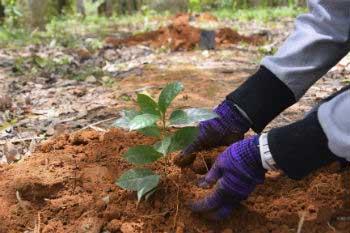 Acción 5 contra el cambio climático: actúa contra la pérdida de bosques