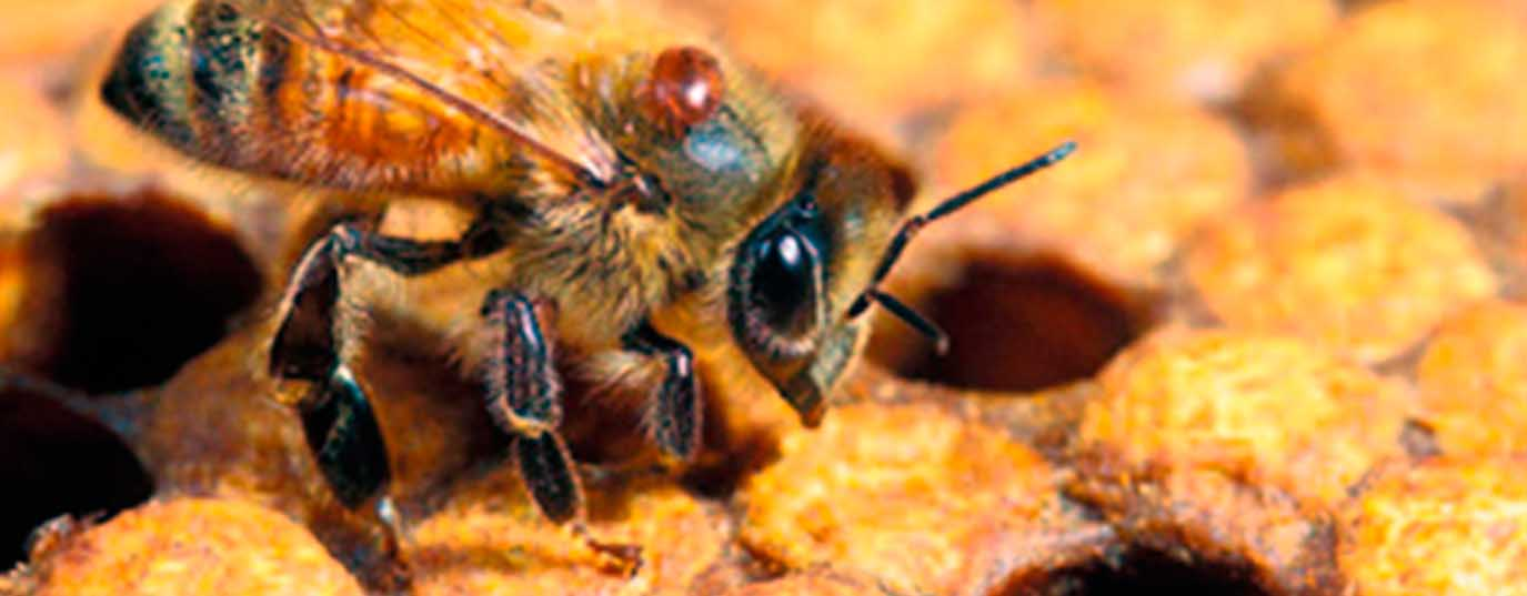 <p>What would happen if bees disappeared?</p> <p> </p>