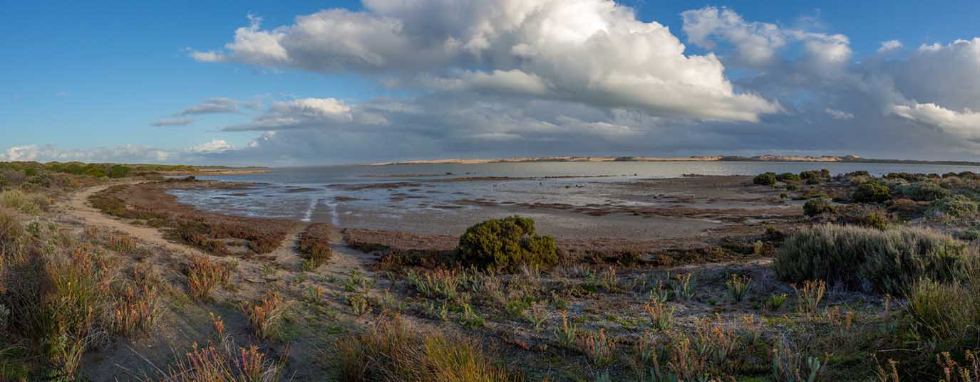 <p>Coorong lagoon and Murray River estuary</p>