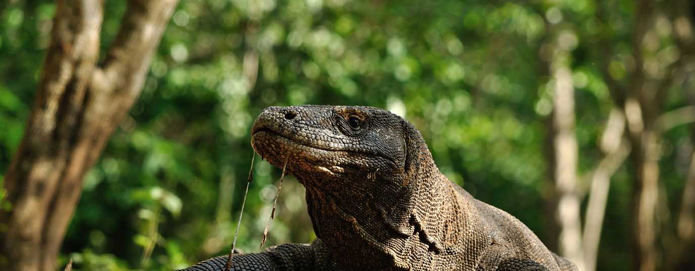 <h2>Indonesia: Komodo National Park</h2> <p> </p>