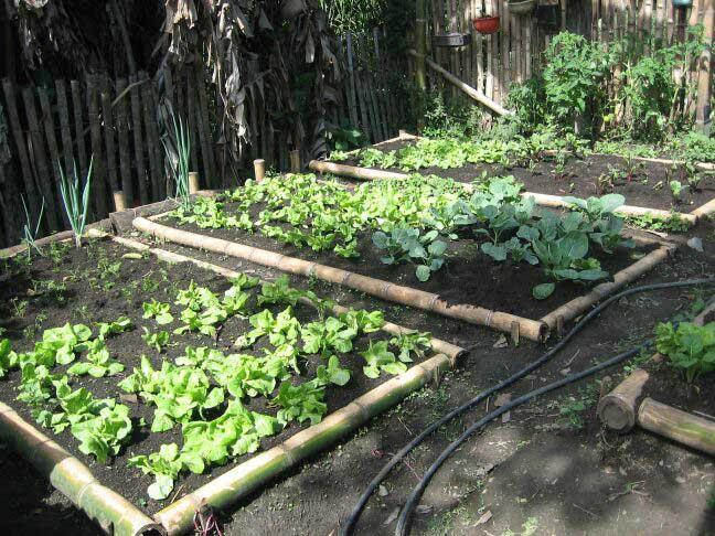 Origen De Los Huertos Urbanos Sostenibilidad Para Todos