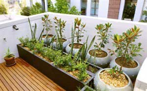 Take advantage of the terrace with your urban garden