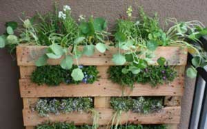 Your urban vertical garden with a pallet