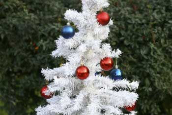133198abe Carbon footprint: Natural vs plastic Christmas tree | Sustainability ...