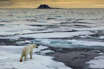 Global warming threatens the polar bear