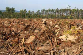 Deforestation threatens thousands of wild species