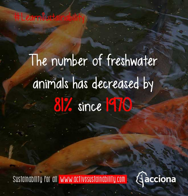 #LearnSustainability: Freshwater animals