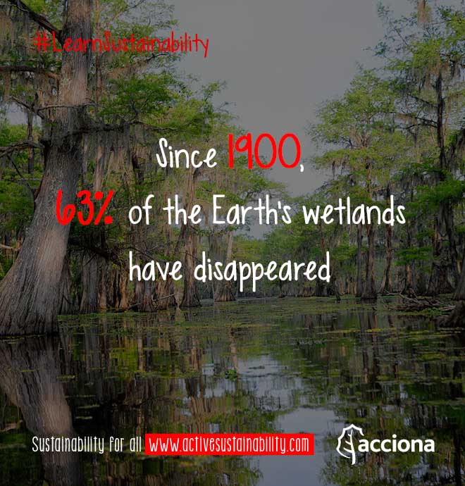 #LearnSustainability: Wetlands disappearence