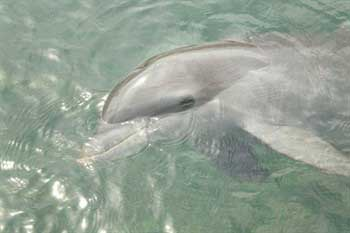 Dolphins cannot survive in captivity
