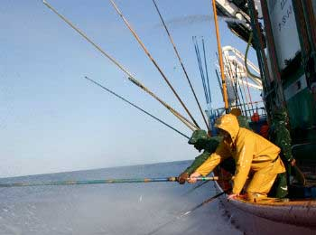 Sustainable fishing or traditional fishing
