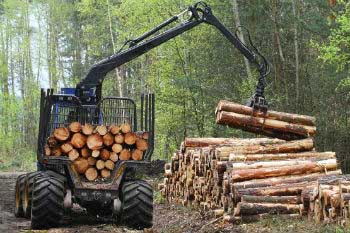 The timber certification ensures sustainable and responsible exploitation