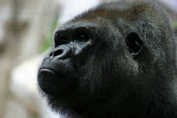 Virunga National Park is the oldest park in the whole of Africa