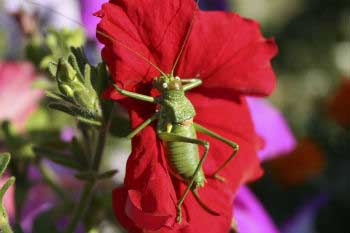 Check for insect infestations at your urban garden
