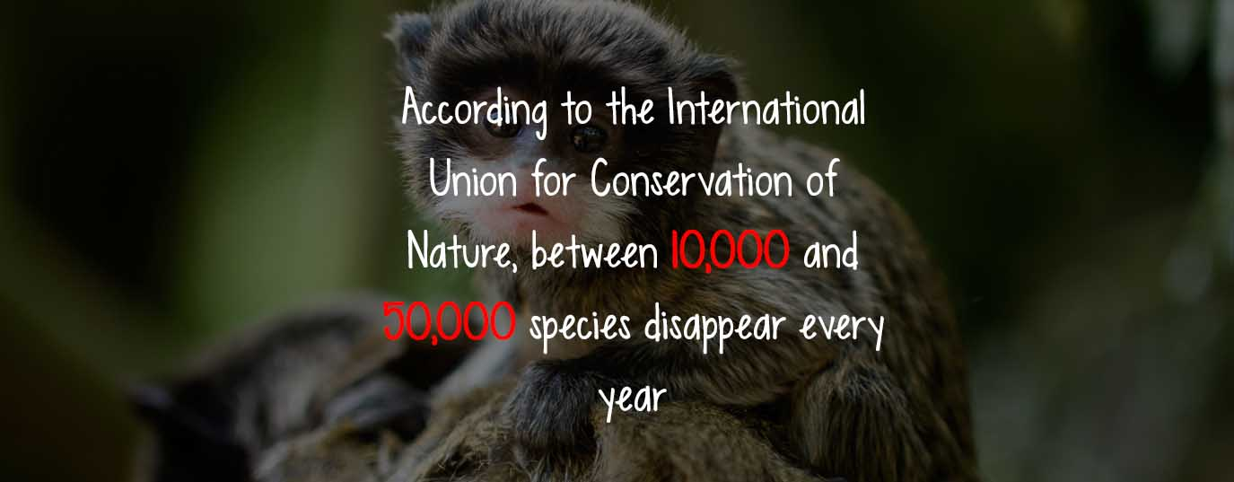 #LearnSustainability: Species extinction