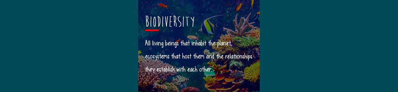 #LearnSustainability: Biodiversity