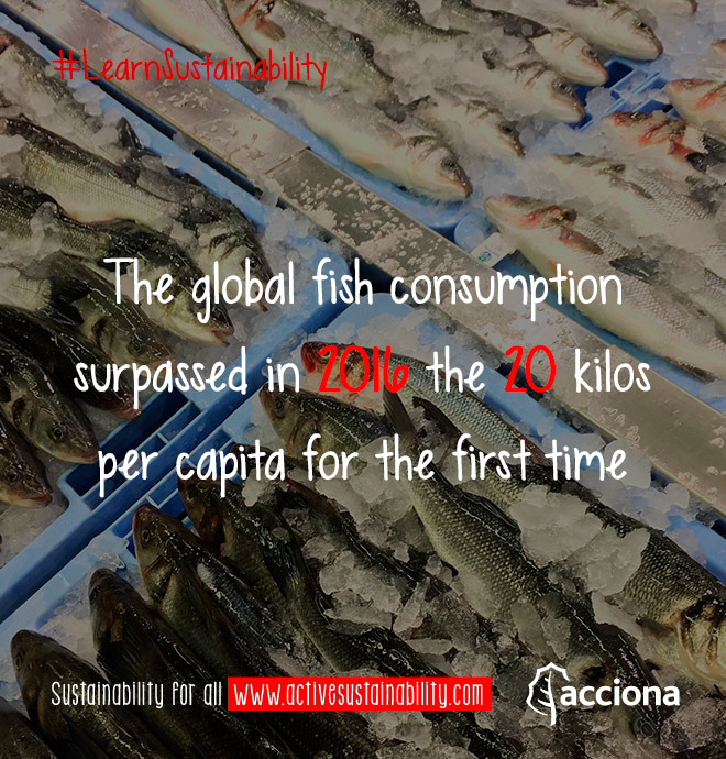 #LearnSustainability: Global fish consumption