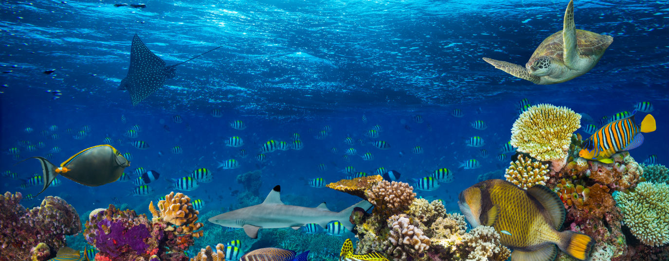 <p>What is a marine protected area?</p>