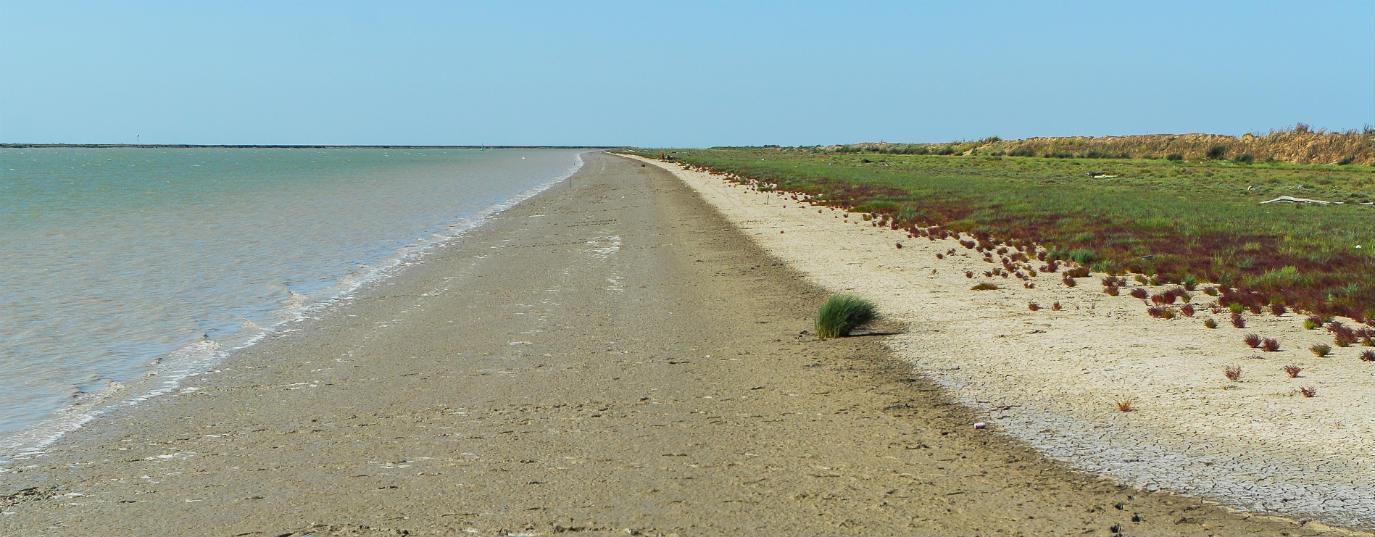 <p>Doñana National and Natural Park (Spain)</p>