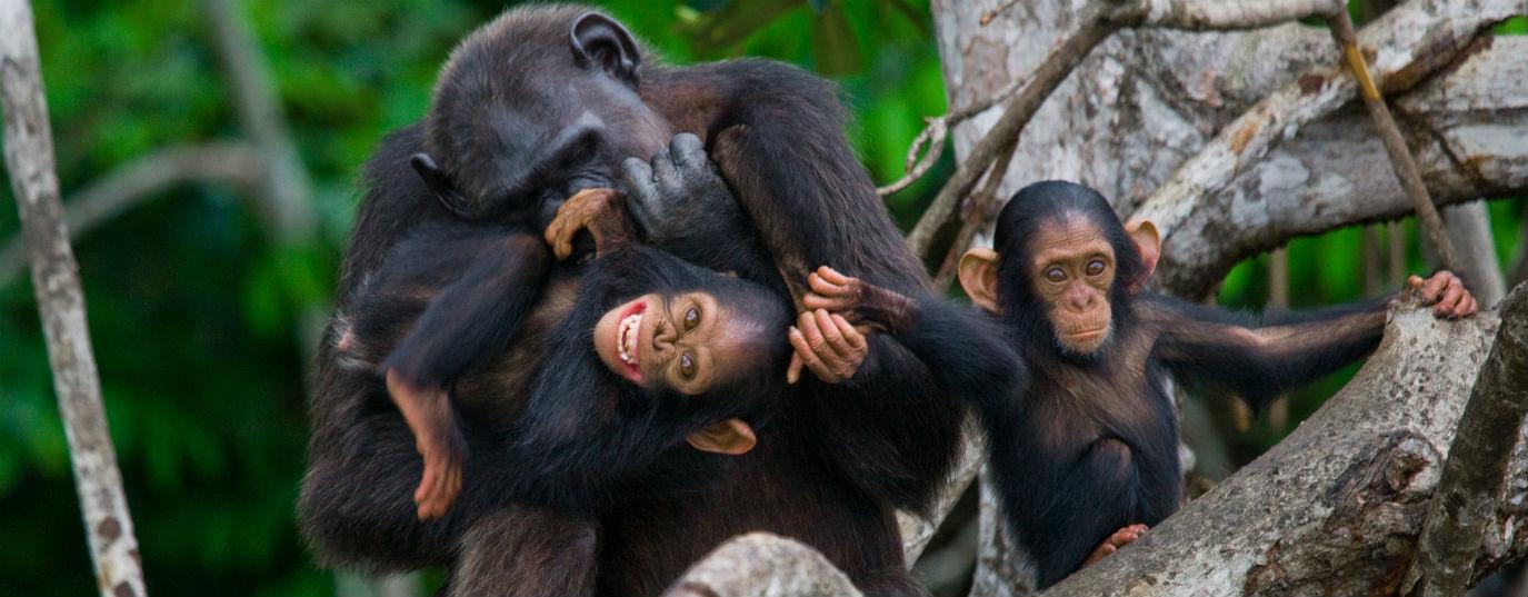 <p>Salonga National Park (Democratic Republic of the Congo)</p>