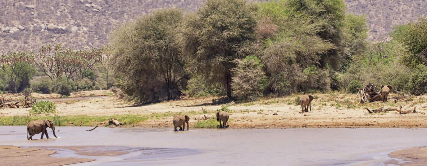 <p>Serengeti National Park (Tanzania)</p>