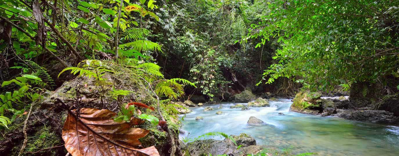 <p>Top 10 most threatened ecosystems</p>