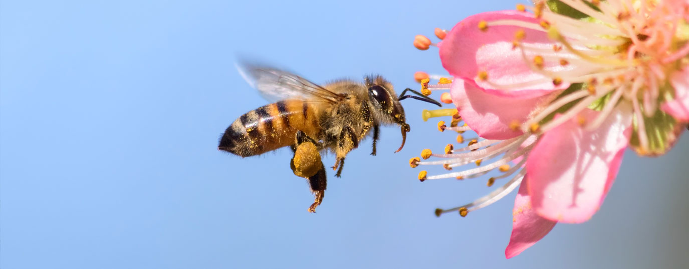 Imagen - What would happen if bees disappeared?