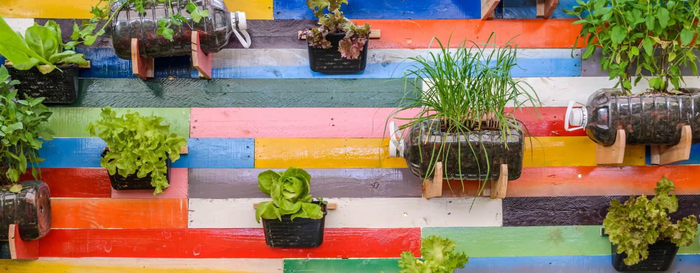 C mo hacer un huerto vertical pasos a seguir for Como hacer un jardin vertical casero y economico