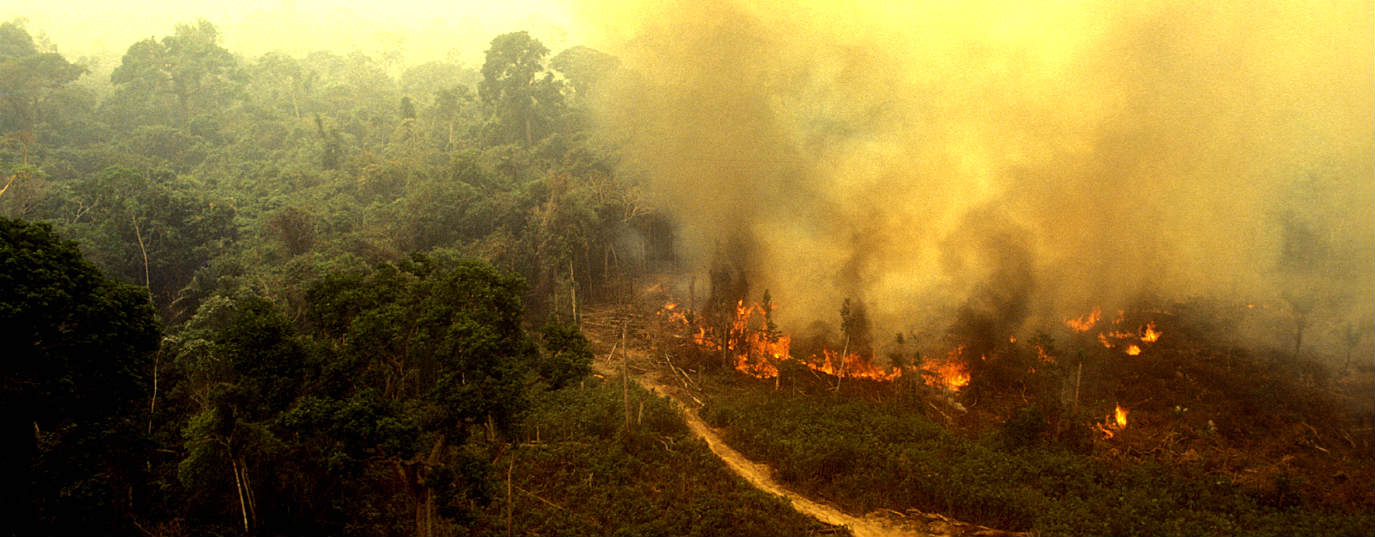 The other Amazonas that also burn