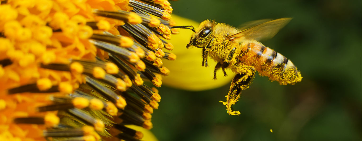 What would happen if bees disappeared?