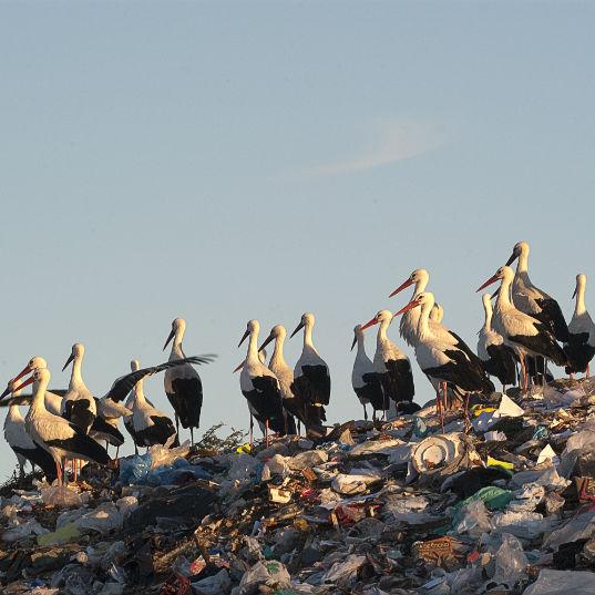 aves vertederos problemas contaminacion